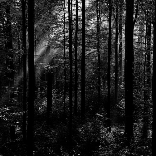 Gahb Forest