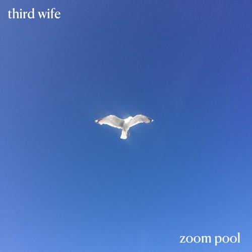 zoom pool cover art